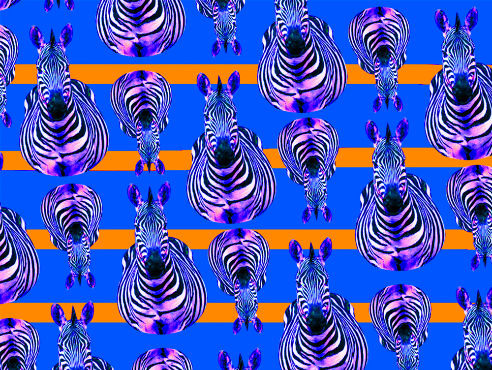 Pattern Collection - Zebra