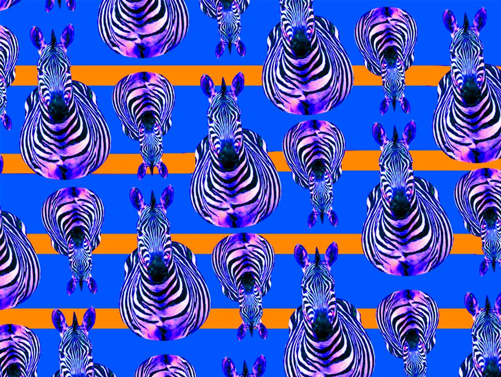 Pattern Collection - Zebra